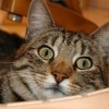Kelly Robinson Facebook, Twitter & MySpace on PeekYou