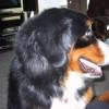 David Eastman Facebook, Twitter & MySpace on PeekYou
