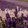 Lisa Lavender Facebook, Twitter & MySpace on PeekYou