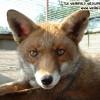 John Fox Facebook, Twitter & MySpace on PeekYou