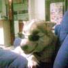Wendy Hamilton Facebook, Twitter & MySpace on PeekYou