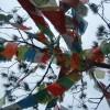 Juanita Childs Facebook, Twitter & MySpace on PeekYou