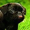 Jennifer Whiting Facebook, Twitter & MySpace on PeekYou