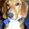Roxy Holder, from Smithfield VA