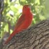 Birdie Bird Facebook, Twitter & MySpace on PeekYou
