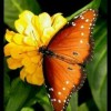 Yunus Bloch Facebook, Twitter & MySpace on PeekYou