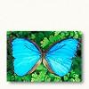 Mel Bolitho Facebook, Twitter & MySpace on PeekYou