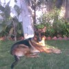 Rachana Sharma Facebook, Twitter & MySpace on PeekYou