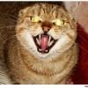 Duff Cat Facebook, Twitter & MySpace on PeekYou