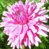 Diane Milligan Facebook, Twitter & MySpace on PeekYou