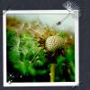 Bee Bee Facebook, Twitter & MySpace on PeekYou