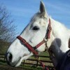 Sharon Howe-Jones Facebook, Twitter & MySpace on PeekYou