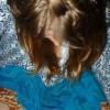 Teresa Franck Facebook, Twitter & MySpace on PeekYou