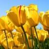 Deepak Mittal Facebook, Twitter & MySpace on PeekYou