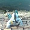 Amrit Khandelwal Facebook, Twitter & MySpace on PeekYou