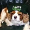 First Display Facebook, Twitter & MySpace on PeekYou